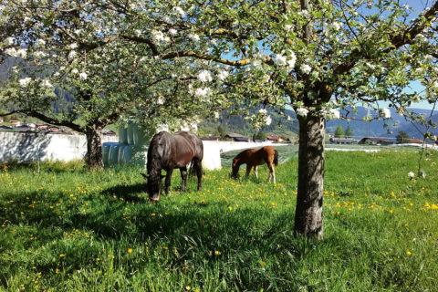 Tiere Bauernhofurlaub Flachau Salzburg 2