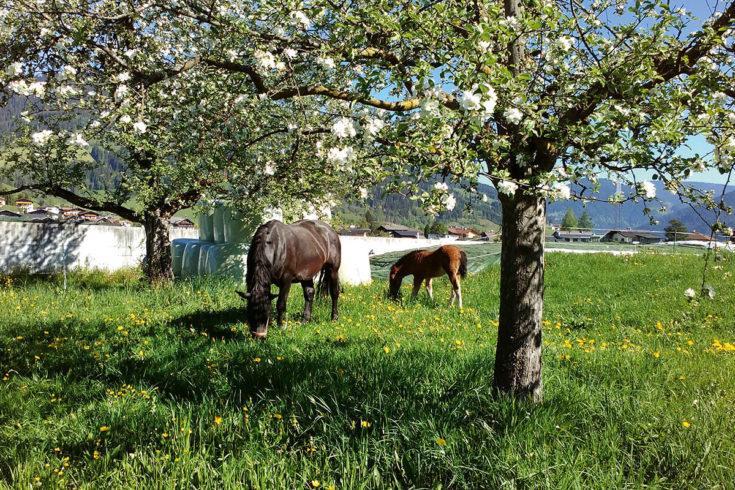 Tiere - Urlaub am Bauernhof in Flachau, Salzburger Land